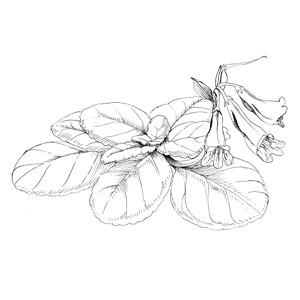 Herb: :草本植物: :草本植物