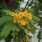 Flowering individual