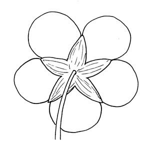 Synsepalous:|:花萼合生的:|:花萼合生的
