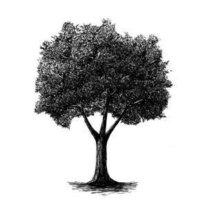 Tree: :喬木: : 乔木