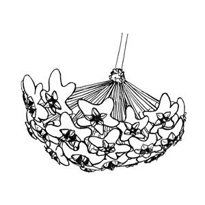 Umbel:|:傘形花序:|:伞形花序