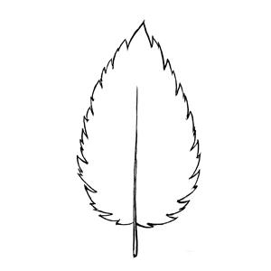 Biserrate:|:具二鋸齒狀的:|:具二锯齿状的
