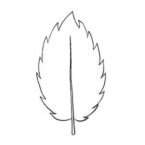 Serrate:|:鋸齒狀:|: 锯齿状