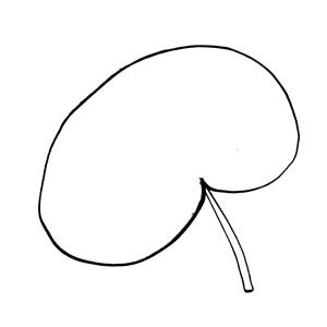 Reniform:|:腎形:|:肾形