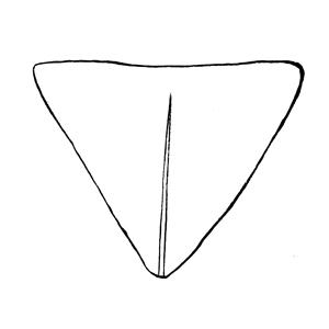 Obdeltoid:|:倒三角形:|:倒三角形
