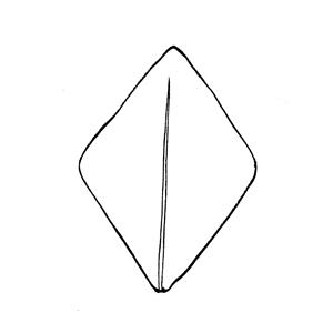 Rhombic:|:菱形:|:菱形
