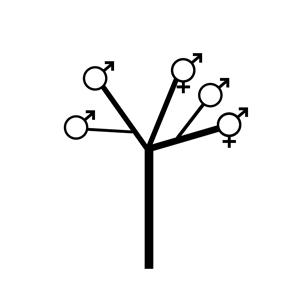 Andromonoecious:|:雄花與兩性花同株的:|:雄花与两性花同株的