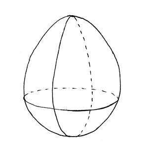 Ovoid: :卵球形的: :卵球形的