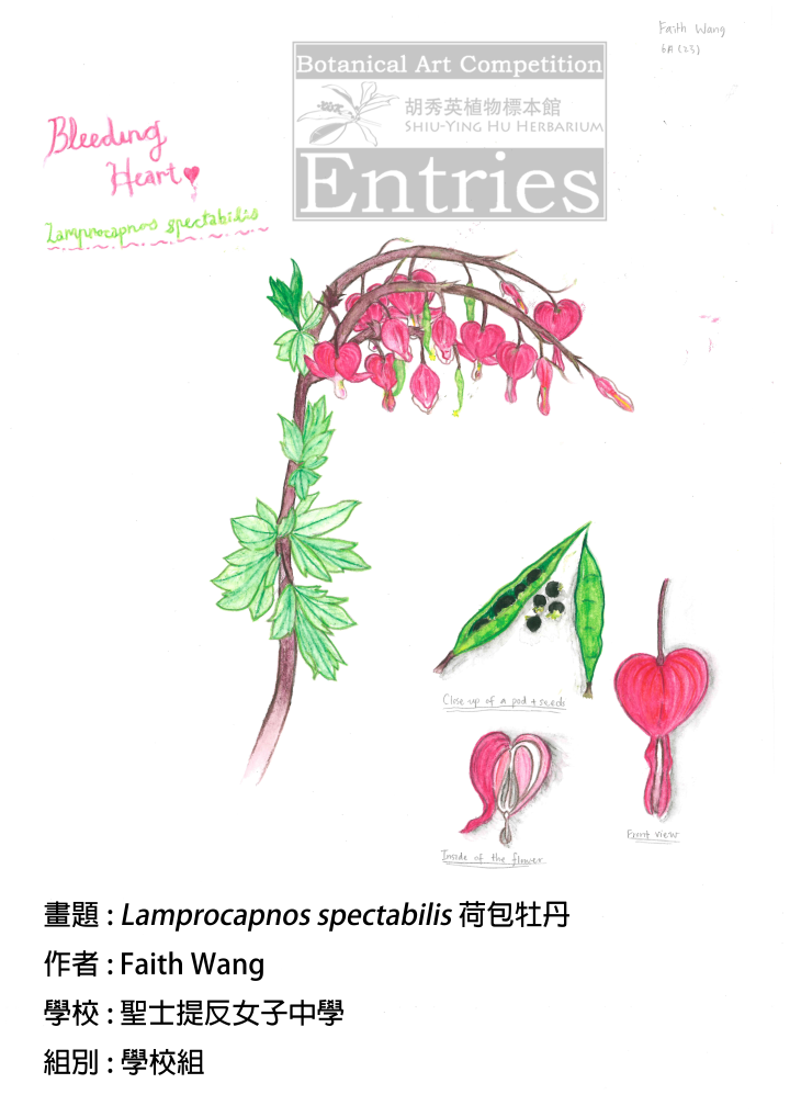 <i>Lamprocapnos spectabilis</i>